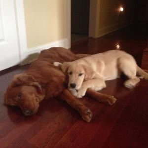 Amanda's Puppy Babies: Loralei & Stella